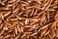 The red rice. Royalty Free Stock Photos