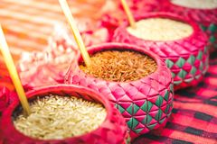 Red rice purple bowl background whole grain rice various types o. F rice royalty free stock photography