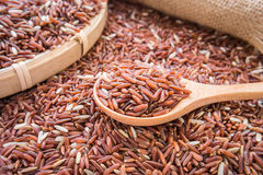 Red rice on wooden spoon Royalty Free Stock Photo