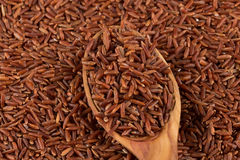 Red rice in a wooden spoon Royalty Free Stock Image