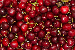 Red rich cherry Royalty Free Stock Image