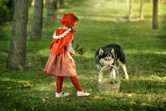 Red Riding Hood and gray wolf in the forest Stock Images