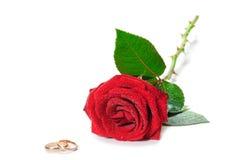 red rings rose wedding Стоковое Изображение