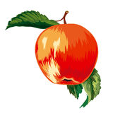 Red, ripe apple Stock Photography