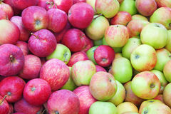 Red ripe apple background Royalty Free Stock Photos