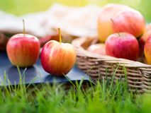 Red ripe apple in basket in autumn vibes. Royalty Free Stock Photography