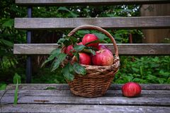 Free Red Ripe Apple In Basket Stock Images - 124104994