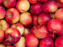 Red ripe apples Royalty Free Stock Photos