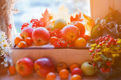 Red ripe apples with autumn leaves and rowan Stock Photos