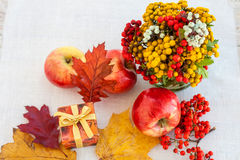 Red ripe apples with autumn leaves and rowan Royalty Free Stock Image