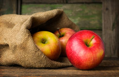 Red ripe apples in a bag Stock Photography