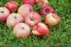 Red ripe apples on fresh green grass Royalty Free Stock Image