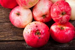 Red ripe apples. Group of red ripe apples on the vintage wooden table stock photo