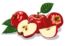 Red ripe apples. Illustration of group of red ripe apples with leaves Royalty Free Stock Photo