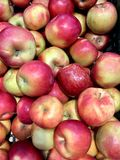 Red ripe apples in large quantities in a tray royalty free stock photo