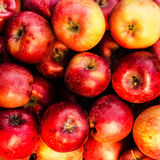 Red ripe apples may use as summer fruit background Royalty Free Stock Photo