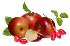 Red ripe apples and rose hip (dog rose hips). Vector illustration.  Red ripe apples and rose hip (dog rose hips Royalty Free Stock Photography