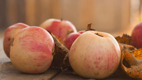 Red ripe apples Royalty Free Stock Images