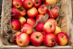 Red ripe apples in wooden box. Royalty Free Stock Image