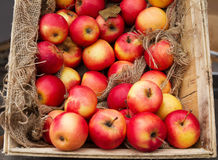 Red ripe apples in wooden box. Stock Photography