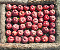 Red ripe apples in wooden frame Stock Photography
