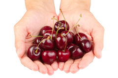 Red ripe cherries in the hand Royalty Free Stock Photography
