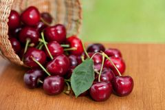 Free Red Ripe Cherries Spilling From Basket On A Wood Table Royalty Free Stock Photography - 124815457