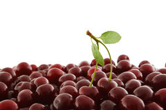Red-ripe cherry Royalty Free Stock Photos