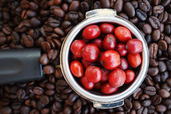 Red ripe coffee on coffee beans Stock Image