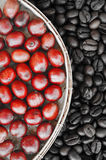 Red ripe coffee on coffee beans backgournd Royalty Free Stock Photos