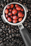 Red ripe coffee on coffee beans backgournd Royalty Free Stock Images