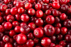 Red ripe cranberries background royalty free stock images