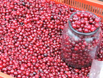 Red ripe cranberries Royalty Free Stock Photo