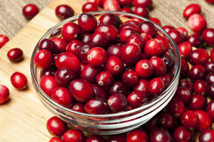 Red Ripe Cranberry Royalty Free Stock Image