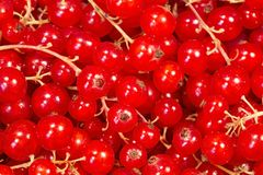 Currant. Red ripe currant close up royalty free stock images