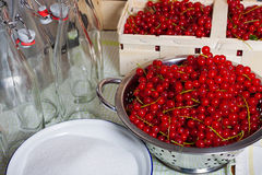 Red ripe currants in colander. Red ripe currants in a colander, sugar in a bowl and Swing top bottles in the background Royalty Free Stock Image