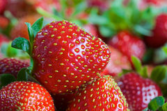 Red ripe fresh strawberries Stock Images