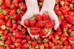 Red ripe fresh strawberries. Royalty Free Stock Photo