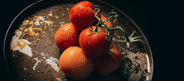 Red ripe fresh tomatoes. On a metal baking tray Royalty Free Stock Photo