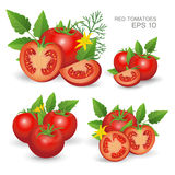 Red ripe fresh tomatoes. Vector illustration. Set of red ripe fresh realistic tomatoes composition with leaves, blossom and dill  on white background Royalty Free Stock Photos