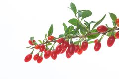 Free Red Ripe Goji Berry On A Branch Isolated On A White Stock Image - 125224861