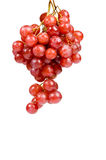 Red ripe grape with drops of water Stock Images