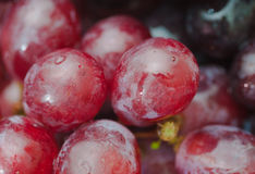Red ripe grapes. Macro photo Stock Image