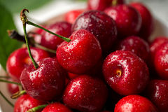 Red, ripe, juicy cherries, water drops, close up royalty free stock image