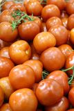 Red ripe juicy tomatoes with green sprig stock photos