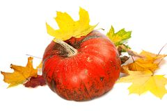 Red ripe pumpkin and autumn leaves Royalty Free Stock Photo