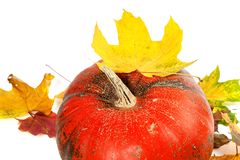 Red ripe pumpkin and autumn leaves Stock Image