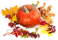 Red ripe pumpkin and autumn leaves on white background Royalty Free Stock Photos