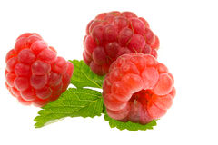 Red ripe raspberries. Three red, ripe raspberry and green leaf stock photo