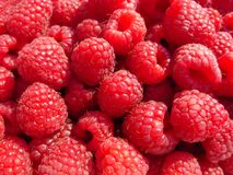 Red-ripe raspberry. The red-ripe raspberry in september Royalty Free Stock Photos